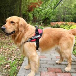 LASSIE - Pet Harness