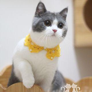 Catland - Faux Pearl Knit Pet Collar