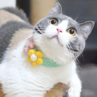 Catland - Knit Flower Pet Collar