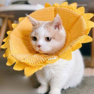 Catland - Knit Animal Ear Pet Hat