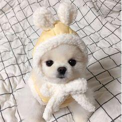 Bixin - Set: Fleece-lined Hat + Pet Top