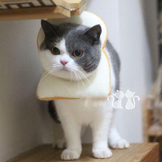 Catland - Toast Pet Hat
