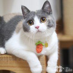 Catland - Carrot Pet Collar