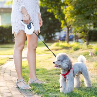 IKR - 自动卷收宠物牵引绳