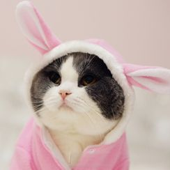 Catland - Rabbit Ear Hooded Pet Top