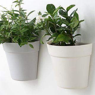 Popcorn - Plastic Wall Hanging Gardening Pot / Set